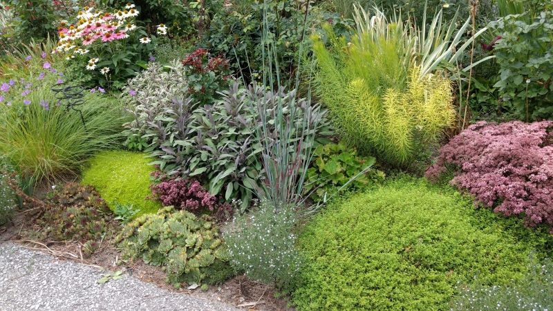 picture of a rich mix of plants with contrasting shapes and textures.